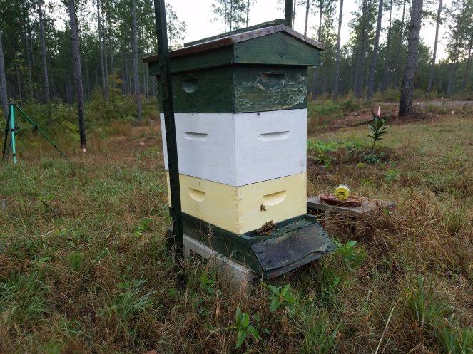 Enlgish Hive