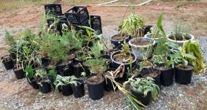 Homeless plants