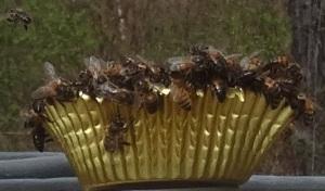 Bees on Fondant