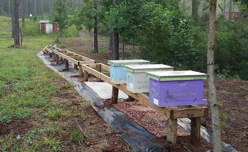 2019-07 New Hive Stands