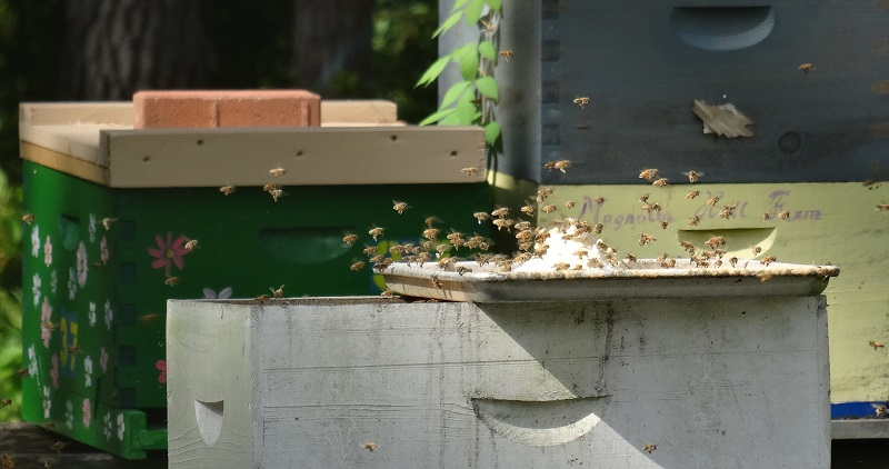 20190720 Pollen